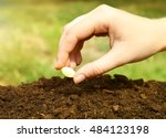 woman hand putting seed into... | Shutterstock . vector #484123198