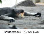 Blur Five Colored Lemurs Sleep.