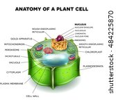 plant cell structure  cross... | Shutterstock .eps vector #484225870