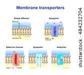mechanisms for the transport of ... | Shutterstock .eps vector #484232704