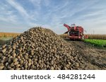 pile of organic beet sugar at...