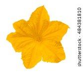 cucumber flower closeup... | Shutterstock . vector #484381810
