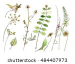 leaves  grass  flowers ... | Shutterstock . vector #484407973