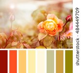 yellow and red roses in... | Shutterstock . vector #484449709