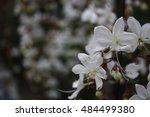 flower | Shutterstock . vector #484499380