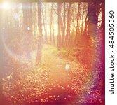 beautiful pathway in woods with ... | Shutterstock . vector #484505560