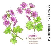 Malva Flowers Vector Set On...
