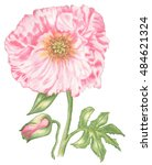 Poppy Shades Of Pink  Yellow...