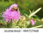 Bee On A Flower Purple