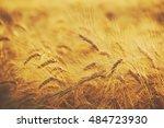 wheat field with ripe ears... | Shutterstock . vector #484723930
