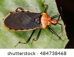 bugs are vibrant and diverse...   Shutterstock . vector #484738468
