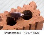 cockroache in house. | Shutterstock . vector #484744828