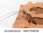 cockroache in house. | Shutterstock . vector #484744858