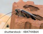 cockroache in house. | Shutterstock . vector #484744864