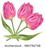 close up of pink tulips on... | Shutterstock . vector #484746748