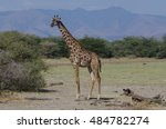 a giraffe to holds in the... | Shutterstock . vector #484782274