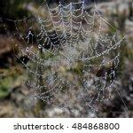 Web Cobweb Spiderweb Net Tissu...