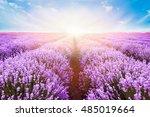 blooming lavender field under... | Shutterstock . vector #485019664