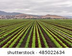 colorful  colourful  fields of... | Shutterstock . vector #485022634