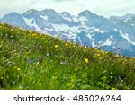 Small photo of A mountain slope with alpestrine flowers