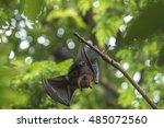 bat hanging | Shutterstock . vector #485072560