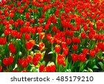 look like fire on earth. | Shutterstock . vector #485179210