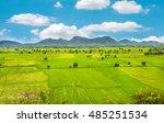 landscape of jasmine rice green ... | Shutterstock . vector #485251534