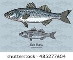 sea bass. vector illustration...   Shutterstock .eps vector #485277604