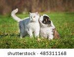 Stock photo saint bernard puppy with a british shorthair cat 485311168