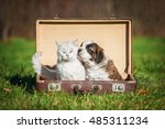 Stock photo saint bernard puppy with a cat sitting in a suitcase 485311234