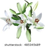 illustration with light lily... | Shutterstock .eps vector #485345689