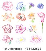 flowers  rose  morning glory ... | Shutterstock .eps vector #485422618