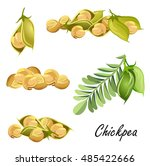 chickpeas   plant  pods  peas . ... | Shutterstock .eps vector #485422666