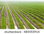 green carrot field   | Shutterstock . vector #485453914