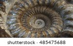 Small photo of Spiral shaped shell, fossil Ammonoid
