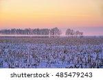 Winter Crop Field With Corn An...