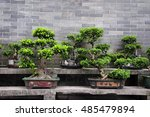 Potted Bonsai Trees On A Stone...