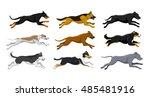 Stock vector running dogs vector illustration including doberman labrador whippet husky collie bernese 485481916