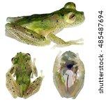 a very rare glass frog ...   Shutterstock . vector #485487694