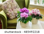 african violets in a home...