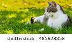 Horizontal Photo Of Adult Cat...