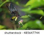 Queen Alexandra's Birdwing ...
