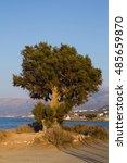 pine | Shutterstock . vector #485659870