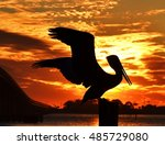 Silhouette Of A Pelican At...