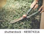 cutting a hedge with garden... | Shutterstock . vector #485874316