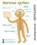 human nervous system for kids.... | Shutterstock .eps vector #485922859