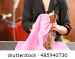 canine hairdresser wiping dog... | Shutterstock . vector #485940730