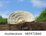 Fungus Growth On Tree Stump In...