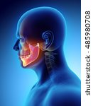 3d illustration of mandible  ... | Shutterstock . vector #485980708