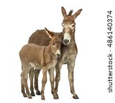 Mother Provence Donkey And Her...